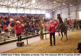 70 hästar såldes under den första dagen avKriterieauktionen. Priserna gick ner rejältjämfört med i fjol. Foto: Petri Johansson
