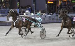 Maharajah sprintar med full spänst i steget in i mål. Foto: ALN