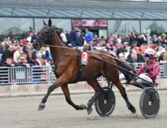 Lutfi Kolgjinis Dante Boko är en av tre svensktränade hästar som ska prova lyckan i Gran Premio Lotteria 1 maj. Foto av Kanal 75