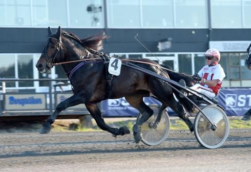 Mjölner Apollo sträcker ut för Per Linderoth. Lars Wikström på Bergsåker tränar. Foto: Lars Jakobsson. TR Bild