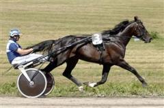 Gazza Degato skadade sig svårt efter en skentur och fick avlivas på måndagsmorgonen. Foto: Claes Kärrstrand.