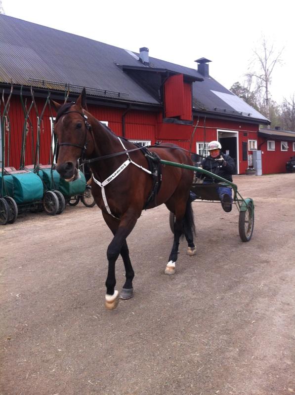 Mitt största minne från Yttersta. Bland massor.Från Maj 2013 när jag fick förtroendet att köra Maharajahs finslipande sista rakbanejobb inför Oslo GP.